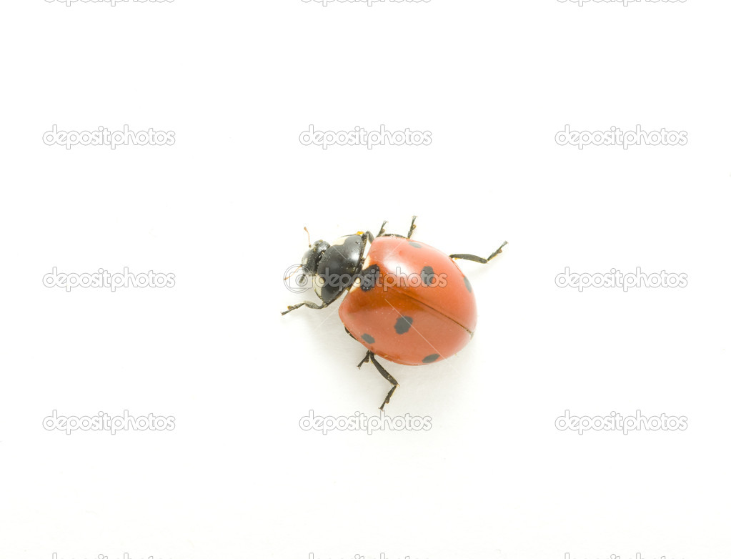 Red ladybug isolated on white — Stock Photo #3238183