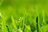 Drop on grass — Stock Photo
