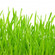 Grass - Foto Stock