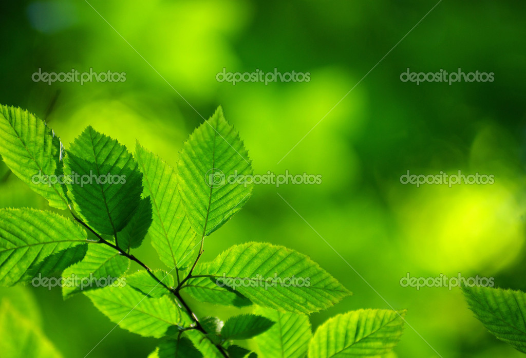Green leaves background in sunny day — Stock Photo #3382233