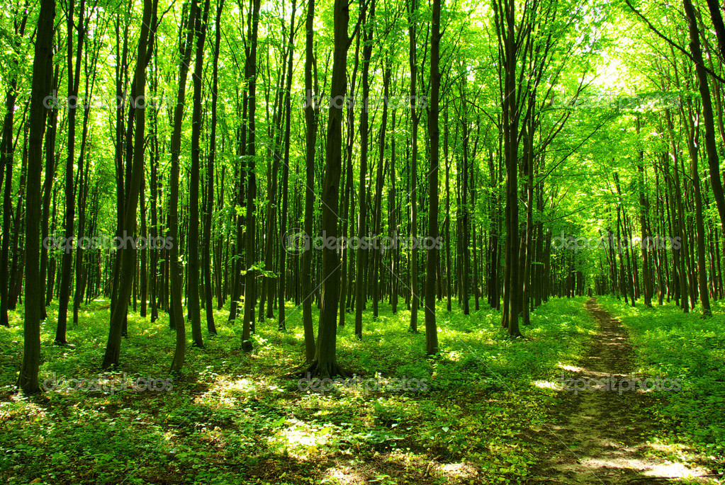 A path is in the green forest  Stock Photo #3382238