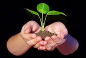 Plantn hands — Stock Photo