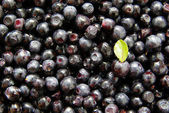 Blueberry background — Stock Photo