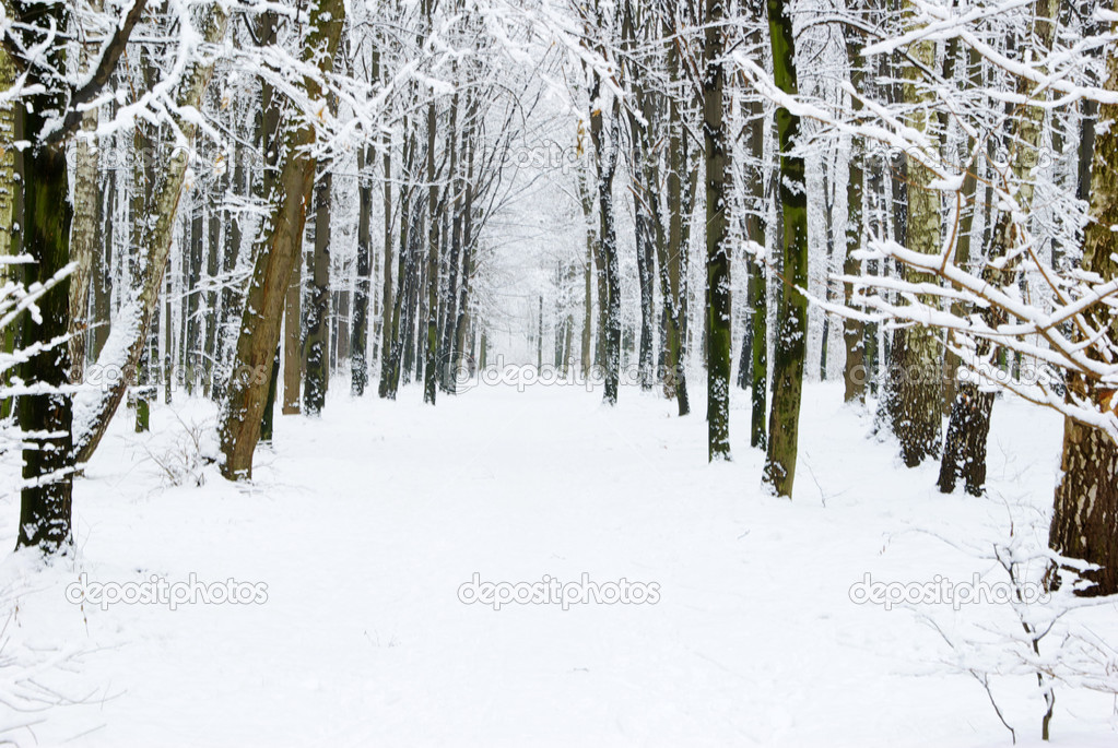 Beautiful winter forest  and the road  Stock Photo #3582417