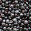 Blueberry background - Stock Photo