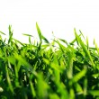 Lawn on white — Stock Photo #3690987