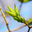 Spring leaves — Stock Photo #3691190