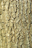 Texture coarse background of old tree — Stock Photo