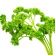 Parsley — Stock Photo #3753306