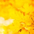 Autumn leaves — Stock Photo #3781999