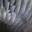 Stock Photo: Feathers