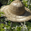 Straw hat on cherry blossom tree — Stock Photo