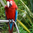 The macaw parrot perched on a branch - Stock Photo