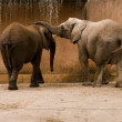 Family of elephants - Stock Photo