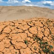 Cracked earth, a desert — Stock Photo