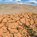 Cracked earth, a desert — Stock Photo