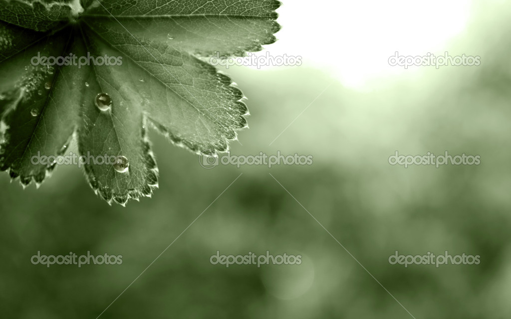 Wallpaper with leaves and drops. — Stock Photo #3734786