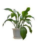 室内植物. — 图库照片
