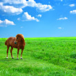 Horse in a field - Stock Photo