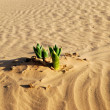 Spring in desert — Stock Photo