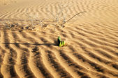 Spring in desert — Stock Photo