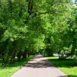 Stock Photo: Path in the park
