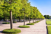 Trees in the park — Stock Photo