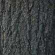 Bark — Stock Photo #3921389