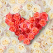Heart of roses on a background of roses — Stock Photo