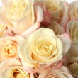 Background of many roses — Stock Photo #3258484