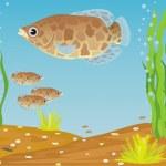 Постер, плакат: Fish for the aquarium