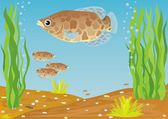 Fish for the aquarium — Stock Photo