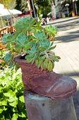 Flower boot — Stock Photo