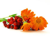 Red rowanberry and yellow flower — Stock Photo