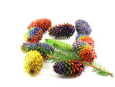 Twig of fir-tree with color cones — Stock Photo