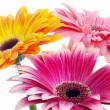 Stock Photo: Flowers on white background