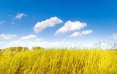 Beautifully landscape — Stock Photo