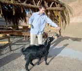 Young man feeding a goat — Stock Photo