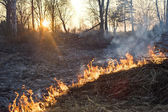 灌木林火 — 图库照片