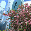 Stock Photo: Spring in city