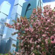 Spring in the city - Foto de Stock