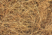 Straw background — 图库照片