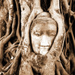 Royalty-Free Stock Photo: Stone budda head in the tree roots
