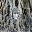 Stone budda head in the tree roots — Foto Stock