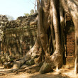 The jungle in  Angkor Wat - Stock Photo