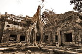 The jungle in Angkor Wat — Stock Photo