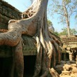 Cambodia's Ta Prohm in Angkor Wat — Stock Photo