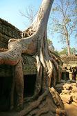Cambodia's Ta Prohm in Angkor Wat — Fotografia Stock