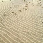 Sand — Stock Photo #2973637