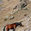 Horse in mountains — Stock Photo